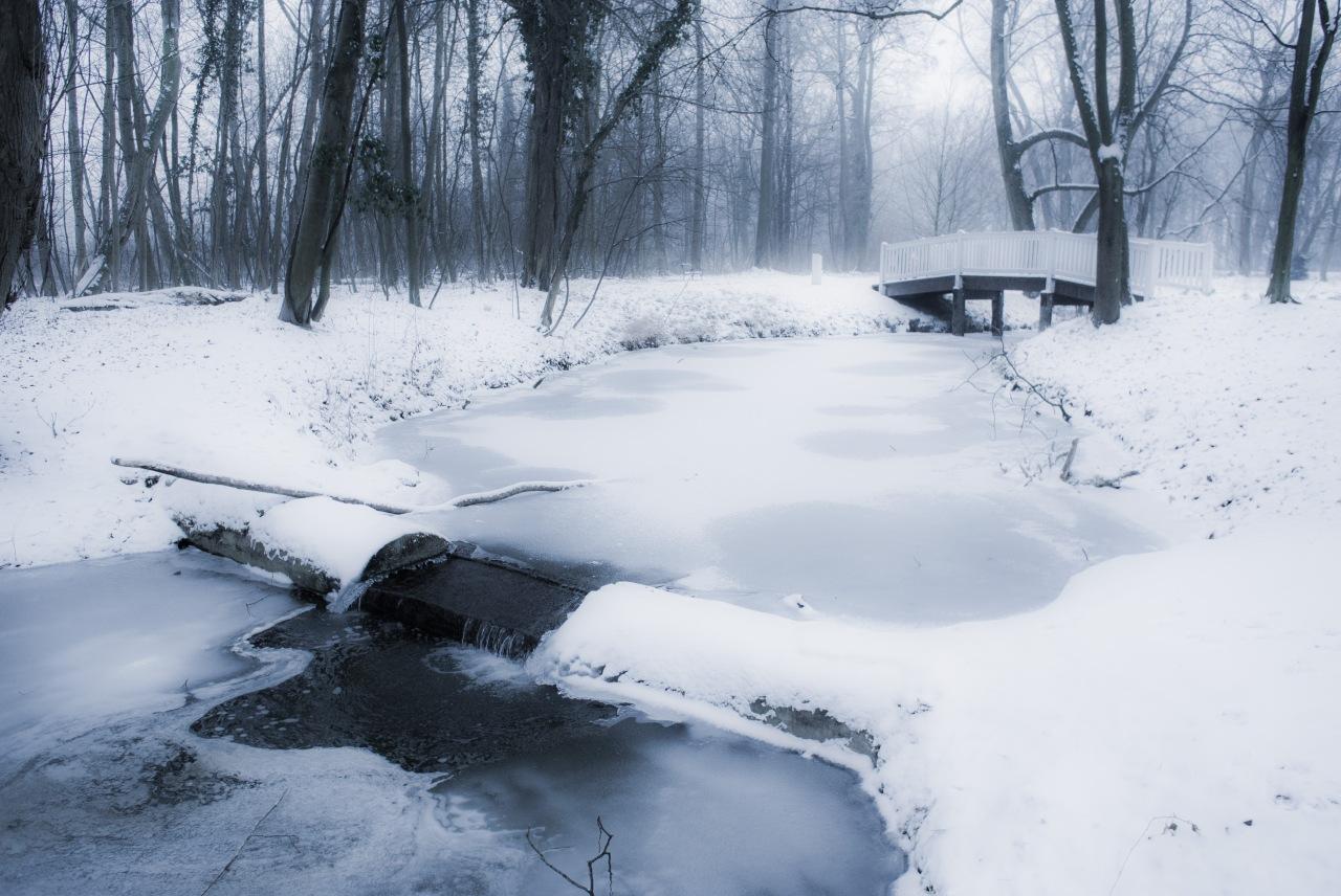 winterparkbilder-tialda-hunde-5231