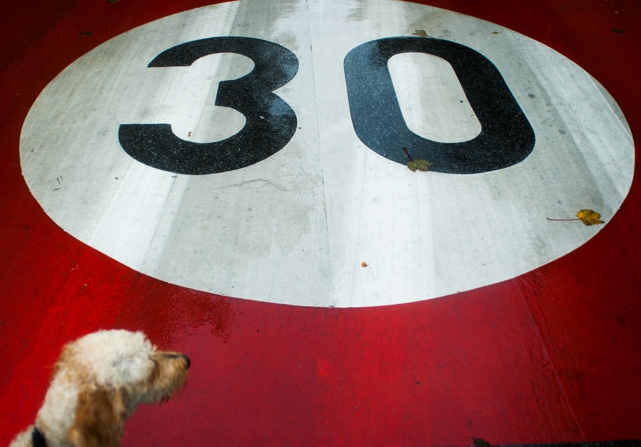 hund-30