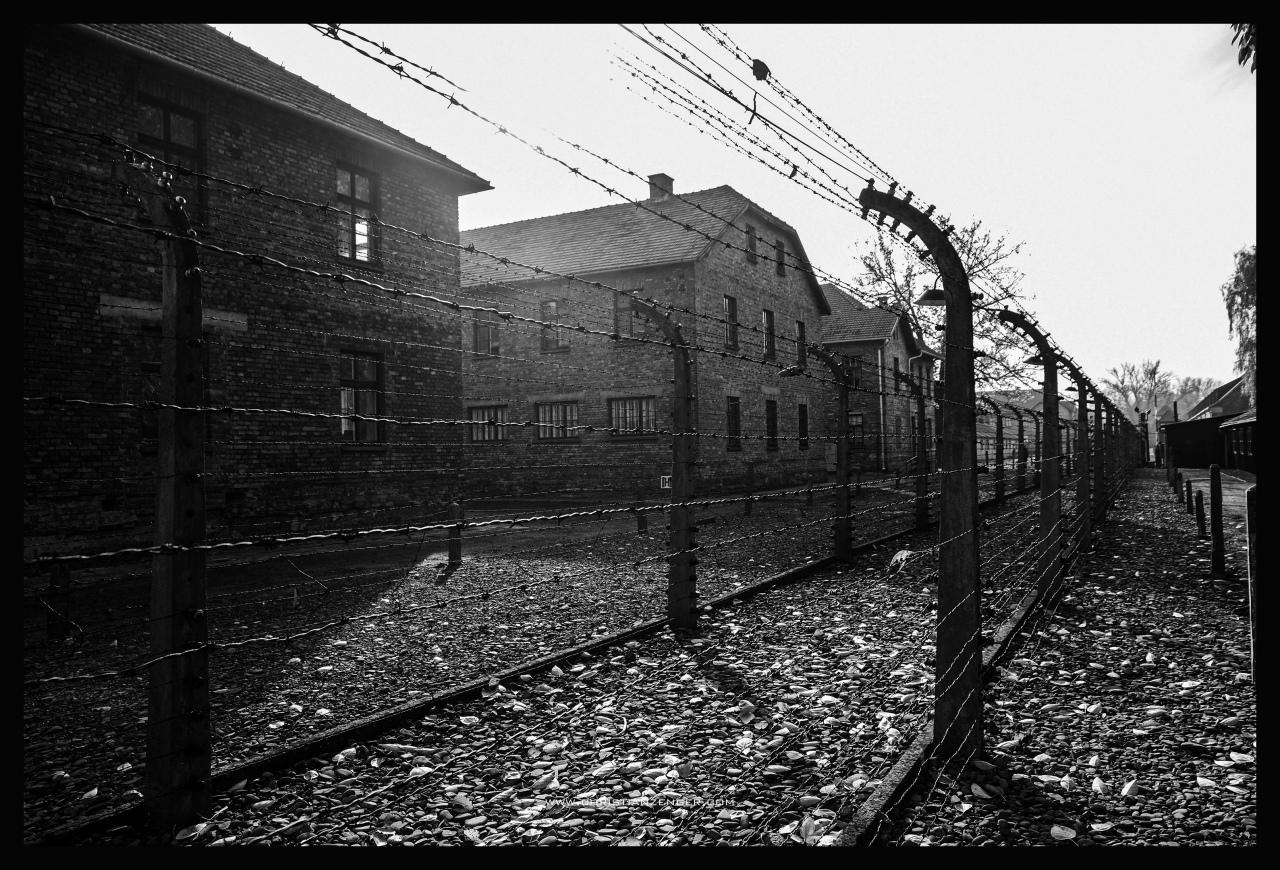 Auschwitz_-6524